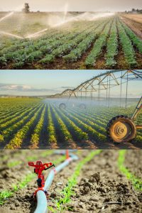 کود کشاورزی اوره