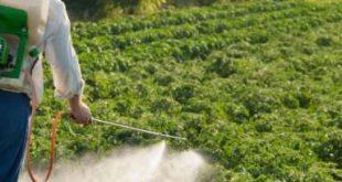 سموم کشاورزی پسته